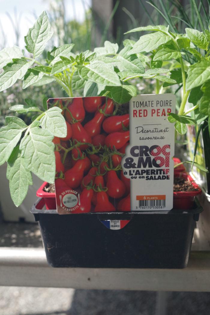 Pépinières De L&172.jpg039;Authion Plto2 Tomate Cerise Poire RED PEAR 172