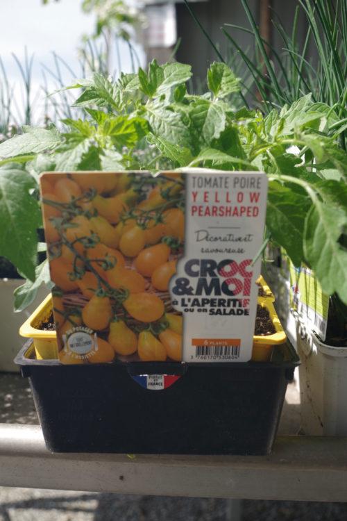 Pépinières De L&177.jpg039;Authion Plto1 Tomate Cerise Poire YELLOW PEARSHAPPED 177