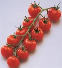 Pépinières De L&179.jpg039;Authion Plto3 Tomate Cerise Grappe SUPER SWEAT 100 F1 179